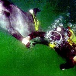 «Сбежавший» кит, участник эксперимента.