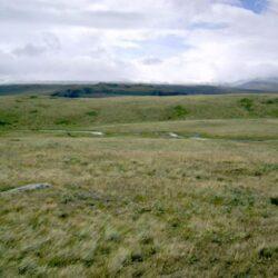 В Сибири найдена массивная древняя голова дикого волка.