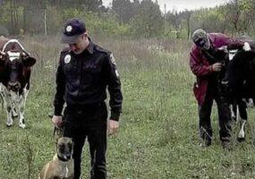 Нападение на пастбище в Аргентине.