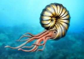Добытчики вместо драгоценных камней, неожиданно нашли древнего морского монстра.