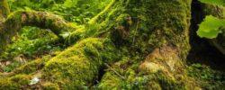 Безлистный пень «зомби» меняет представление о сосуществовании растений.