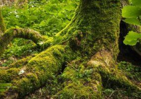 """Безлистный пень """"зомби"""" меняет представление о сосуществовании растений."""