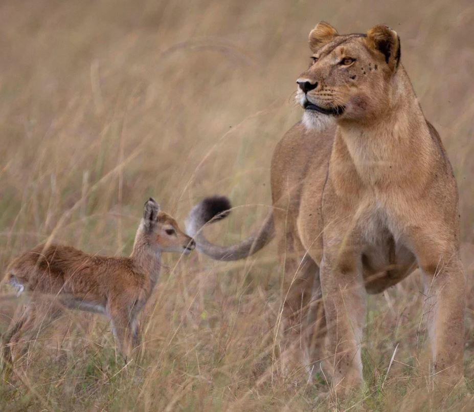 Даже львица способна