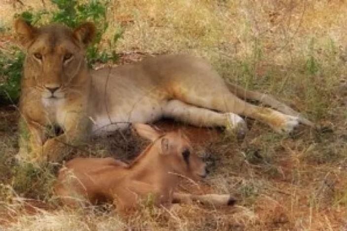 Удивительная история об усыновлении в мире дикой природы. фото:    Mammamia.blog