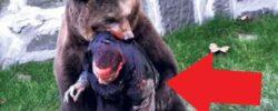 Лиса, осетр и другие нападения животных.