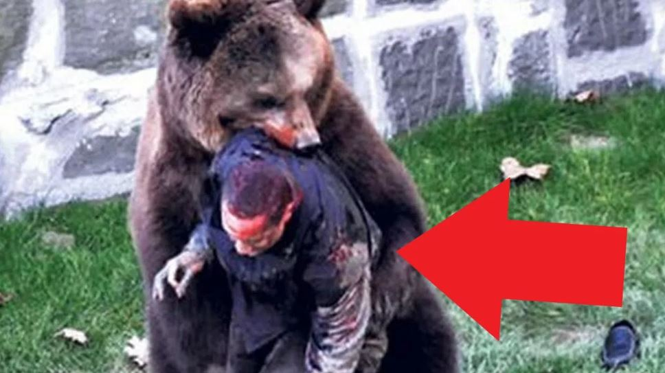 Нападение животных.