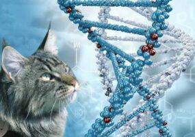 Природа-лучший генетик.