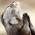 молящийся.