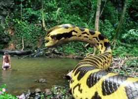 Огромная змея на реке Кламат.