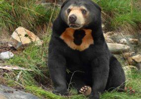 Вы знаете сколько видов медведей существует?