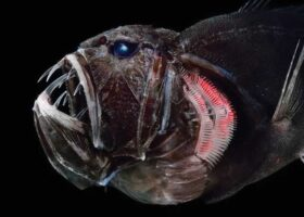 В подводных вулканах обнаружены страшные, новые виды рыб.
