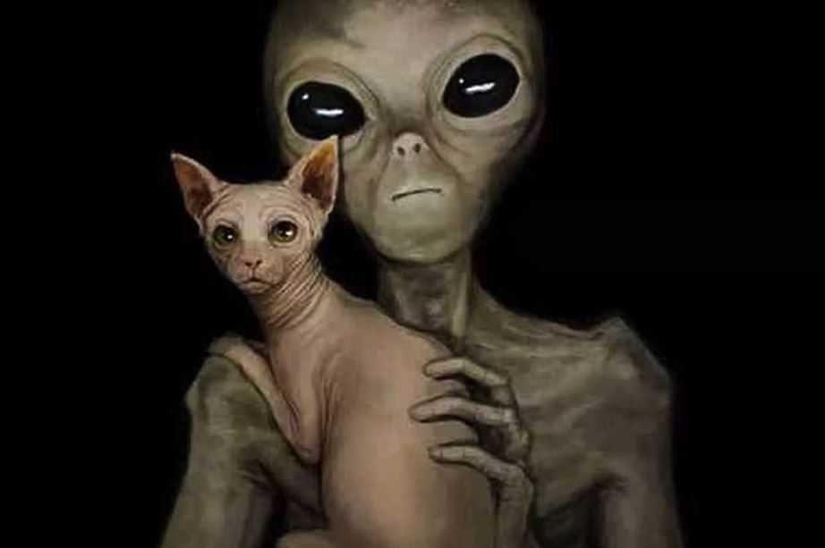 Чупакабра-домашний питомец пришельцев.