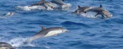 Дельфины предлагают необычную помощь бразильским рыбакам.