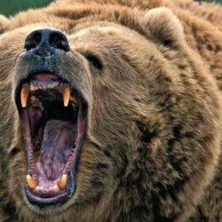 Удивительное спасение человека, встретившего медведя.