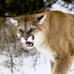 Неопознанное смертельно опасное существо в штате Кентукки.