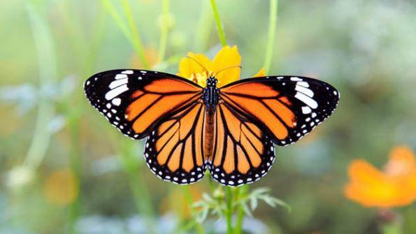 фото: listverse-wpengine.net