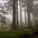 """Таинственные """"вздохи"""" леса."""