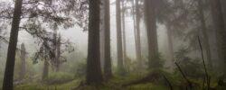 Волшебный, дышащий, Канадский лес.