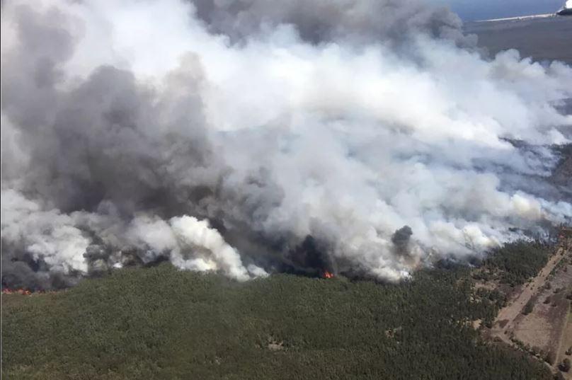 Из-за пожаров на востоке Австралии введено чрезвычайное положение.
