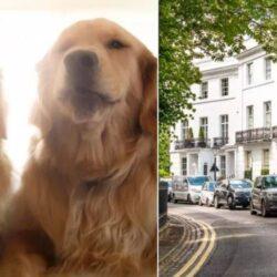 Заработок более $ 41 000, в лондонском таунхаусе.