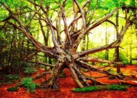 Мистические деревья со всего мира.