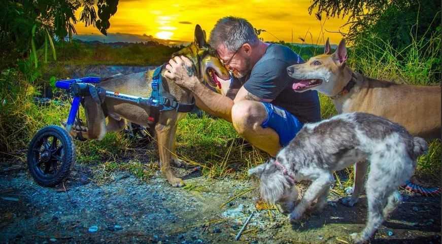 Две истории спасения животных человеком.