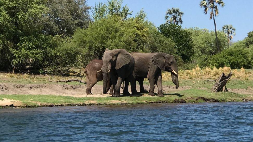 Слоны в поисках пищи приближаются к людям. фото: https://news.sky.com