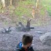 Хищник набрасывается на ребёнка в зоопарке Дублина.