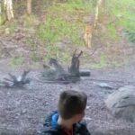 Нападение тигра на ребёнка в зоопарке Дублина.