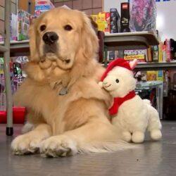 Полицейская собака обвиняется в краже игрушек.