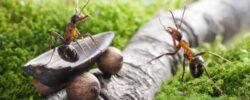 В этой войне — победа за насекомыми.