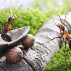В этой войне – победа за насекомыми.