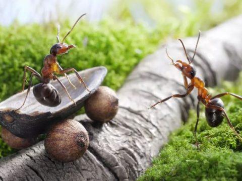 В этой войне - победа за насекомыми.