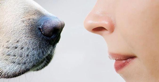 Хозяин и собака - нос к носу.