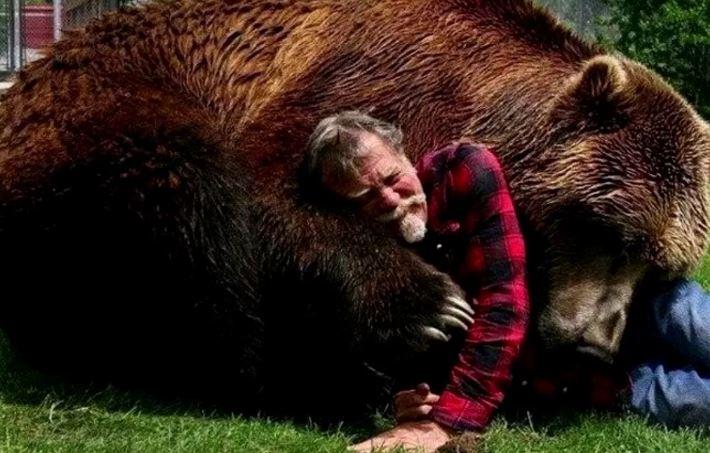 Медведь играет с человеком.