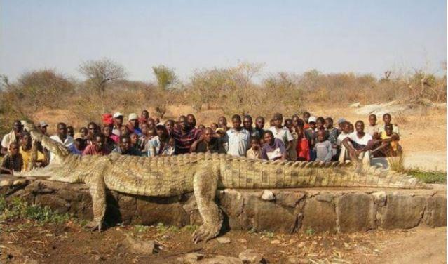 Самый большой крокодил в мире.