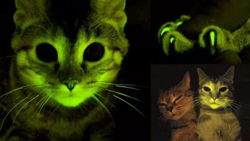 Светящиеся кошки.