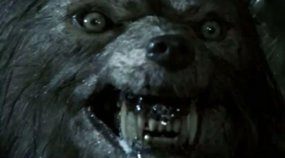 Огромное существо, похожее на волка, снято при нападении на собаку
