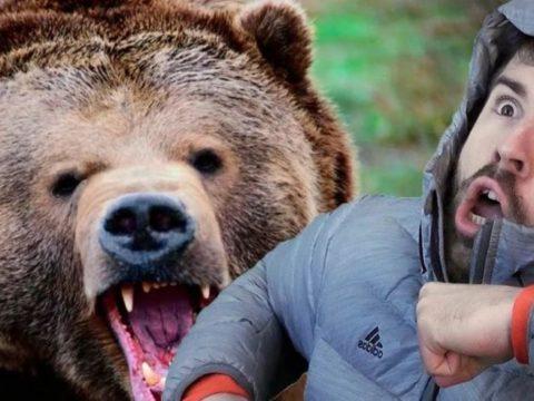 Медведь укусил за руку.