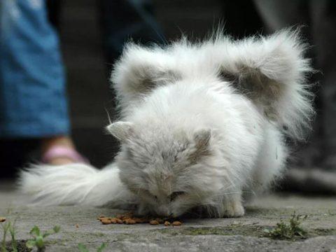 Кошки не могут взмахнуть крыльями и практически не могут контролировать их.
