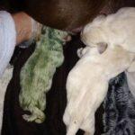 Хозяева собаки не могли поначалу поверить, что родился зелёный щенок.