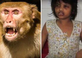 Девочка ходит на четвереньках и кричит, как обезьяна
