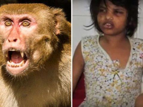 """В Индии обнаружили девочку-""""Маугли"""""""