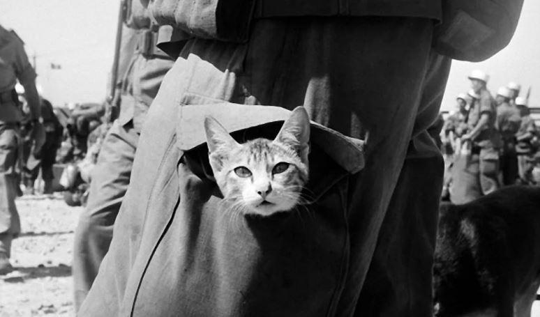 Военные кошки.
