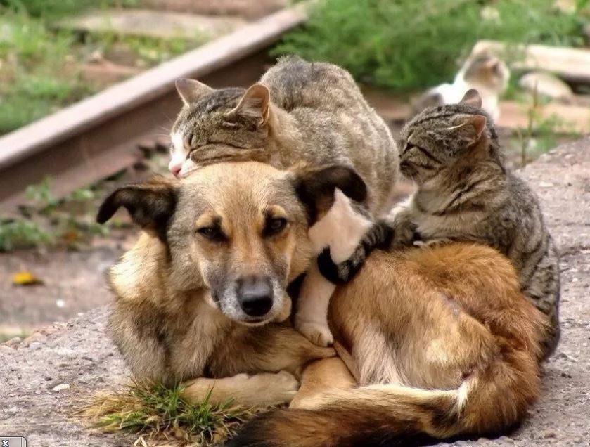 Бездомные кошки и собаки, пожалуй - бич всех стран.