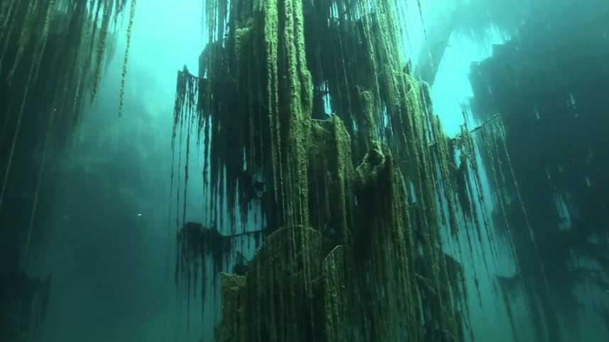 Подводный пейзаж завораживает.