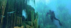 Самый удивительный лес в озере Казахстана