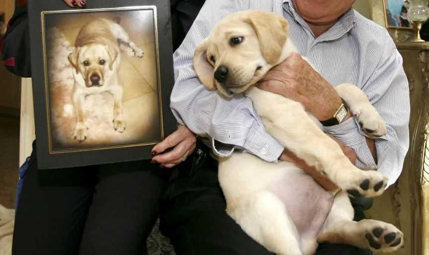 Сэр Ланселот Энкор- пес, который появился на свет в результате клонирования.