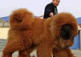 Самые дорогие животные приобретенные человеком
