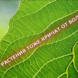 """Растения могут """"кричать"""", когда испытывают боль."""